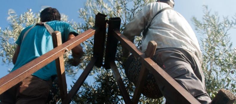 La Junta edita un folleto informativo con medidas para prevenir el Covid-19 destinadas a trabajadores y empresarios agrícolas