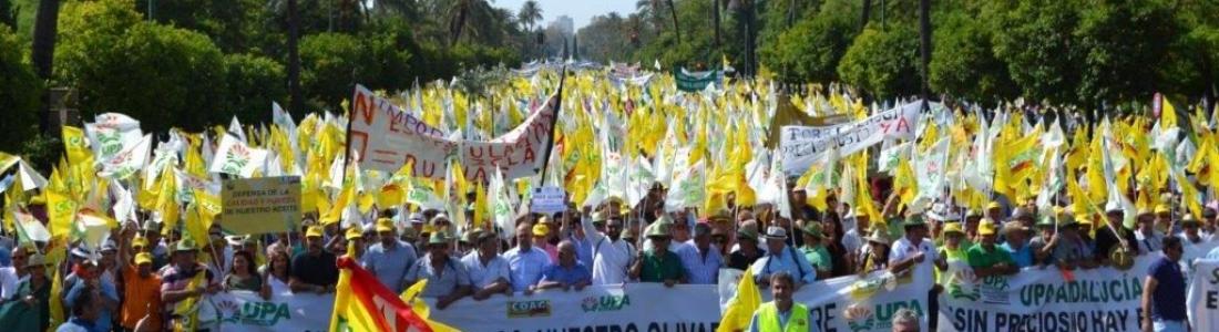Miles de olivareros protestan en Sevilla por la crisis de precios del aceite de oliva