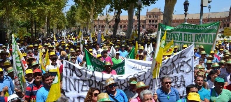 COAG y UPA convocan el 10 de octubre en Madrid una gran manifestación en defensa del olivar tradicional