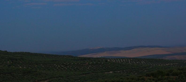 La DO Sierra de Cazorla cierra la campaña con 22 millones de kilos de aceite
