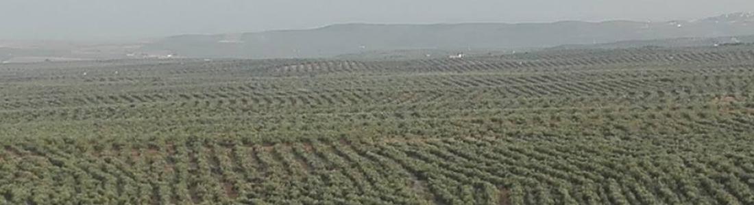 La UNIA retoma las clases del Máster ADE en administración de empresas oleícolas