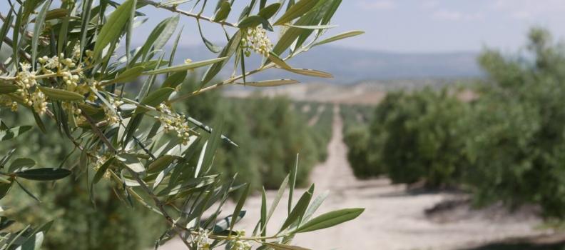 El sector productor analiza en Geolit la situación del aceite de oliva y acuerda solicitar una reunión con el Ministerio de Agricultura para concretar actuaciones