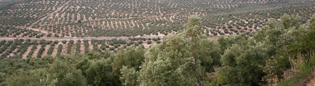 UPA-Andalucía reclama al Ministerio de Agricultura más apoyo a los seguros agrarios