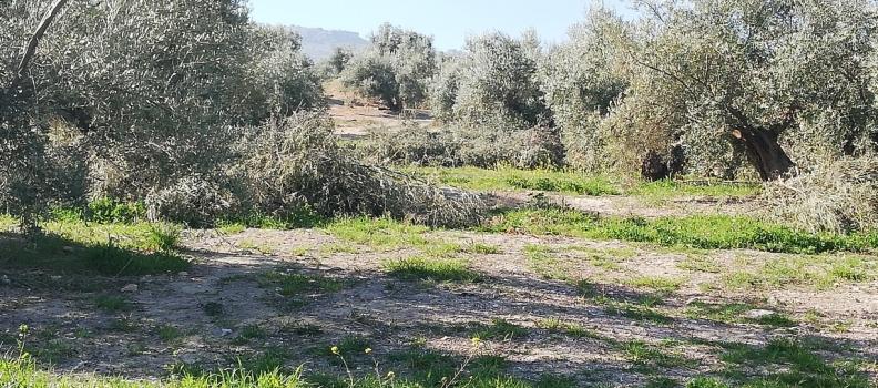 ASAJA-Jaén considera que el registro horario laboral en el campo es «muy difícil de implantar»