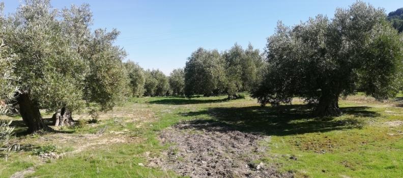 Ecovalia destaca la tercera posición de España en superficie ecológica en el mundo