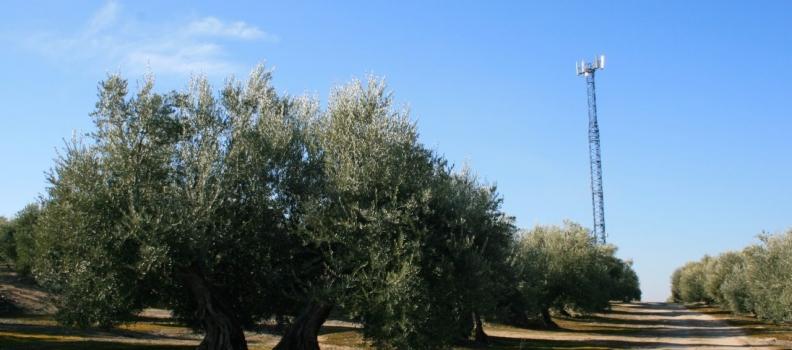 El PSOE exige a la ministra de Agricultura que el olivar en pendiente reciba ayudas asociadas