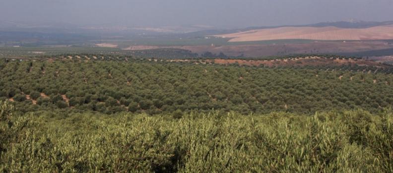 Cabanas dice que el mantenimiento de un suelo fértil es uno de los pilares de la agricultura sostenible