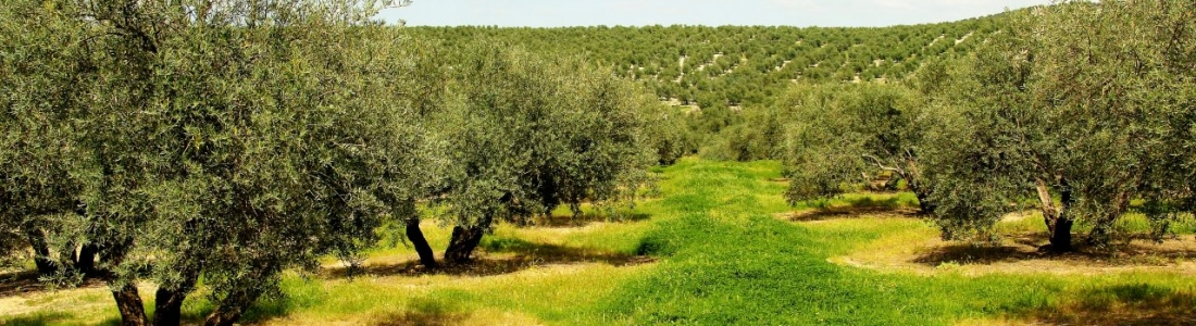 COAG Andalucía pide la inmediata publicación de la Orden de reducción de módulos