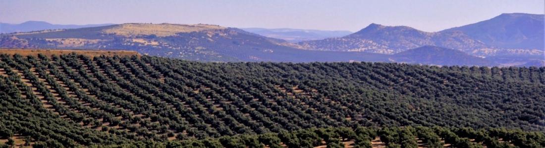 El anteproyecto de la Ley de Agricultura y Ganadería de Andalucía recibe más de 640 aportaciones