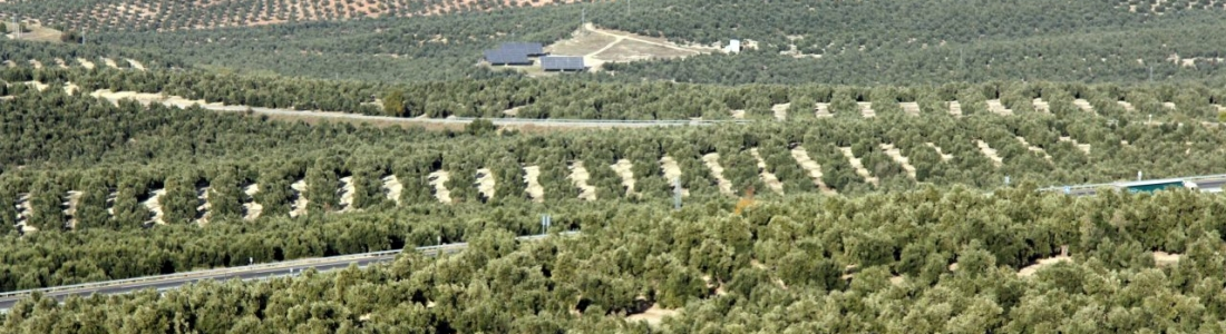 El Ministerio de Agricultura y los organismos pagadores de España y Portugal analizan la simplificación de controles de ayudas de la PAC