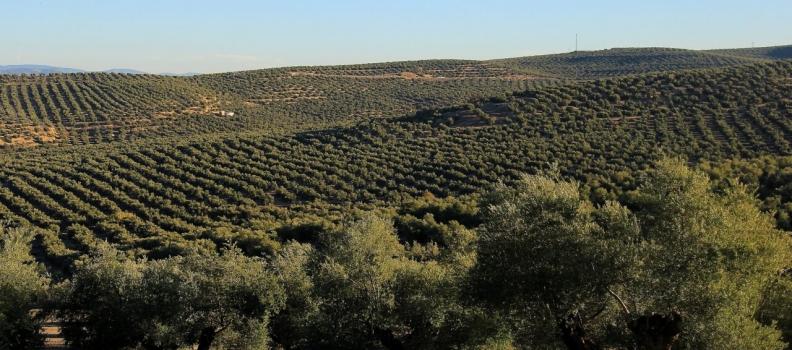 Planas presenta al Consejo de Ministros el informe sobre la Política Agraria Común (PAC)