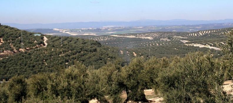 El sector olivarero refuerza la unidad de acción para planificar un proceso nacional de movilizaciones en 2020