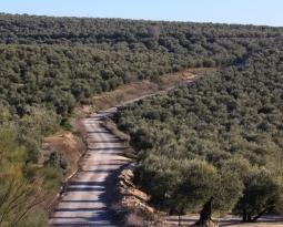 ASAJA, COAG y Cooperativas Agro-alimentarias de Jaén rechazan el decreto de convergencia aprobado por el Gobierno