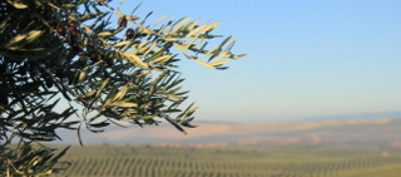 La World Olive Oil Exhibition se celebrará en Madrid los días 2 y 3 de marzo