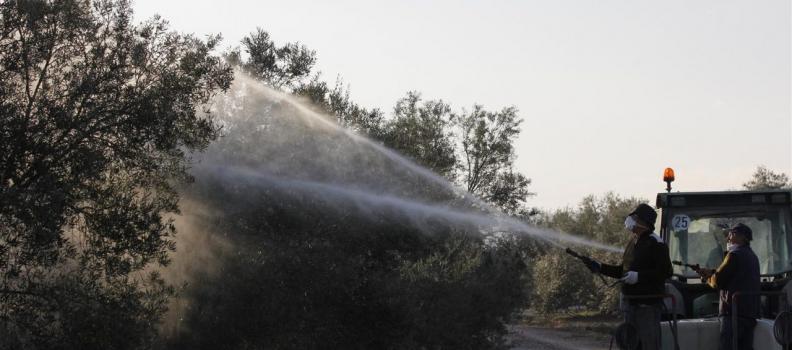 Las Jornadas Técnicas de Futuroliva analizarán el precio y el mercado del aceite de oliva