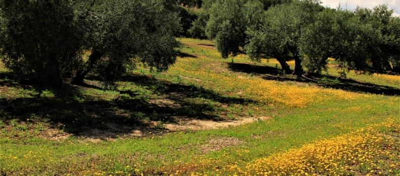 Asoliva insta a la UE a negociar con EE UU una armonización legislativa que favorezca el comercio del aceite de oliva