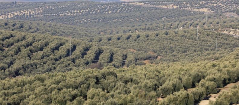 El precio medio de la tierra en Andalucía sube un 1,4% en 2014 tras siete años sin incrementos