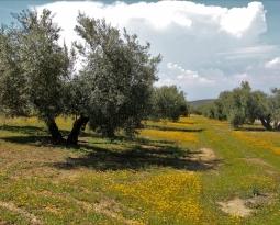 UPA Jaén forma a agricultores en producción ecológica y técnicas biodinámicas para mejorar la innovación y la calidad