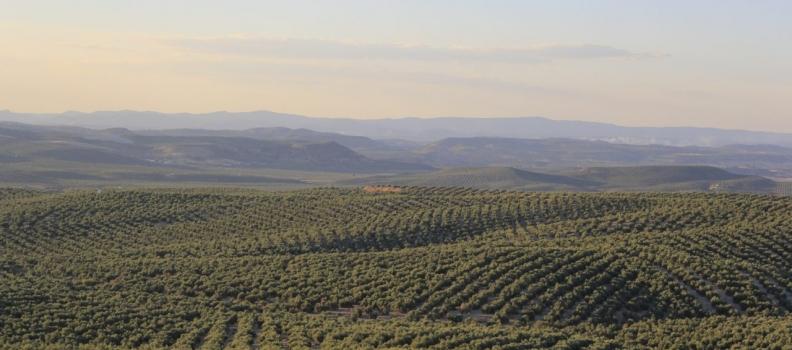 La Conferencia Sectorial de Agricultura distribuye 120 millones de euros para Programas de Desarrollo Rural de las CC AA