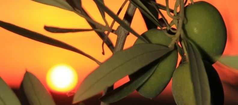 Casi 287.000 toneladas de aceite de oliva se han comercializado en los dos primeros de esta campaña 2019/2020