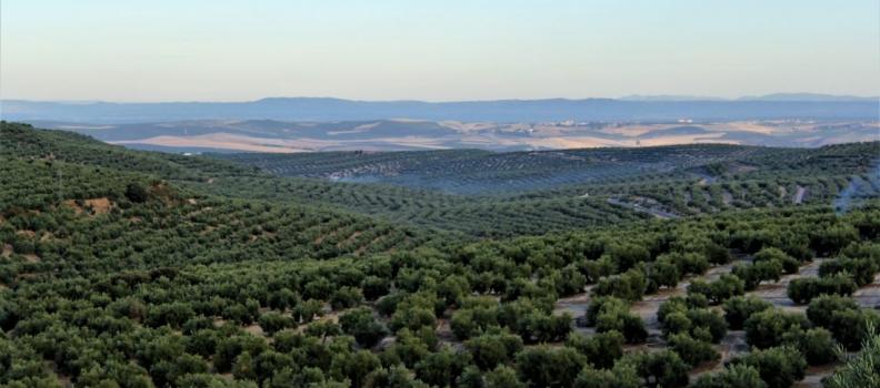 Las exportaciones agroalimentarias andaluzas crecen un 5% entre enero y octubre respecto del mismo período de 2018