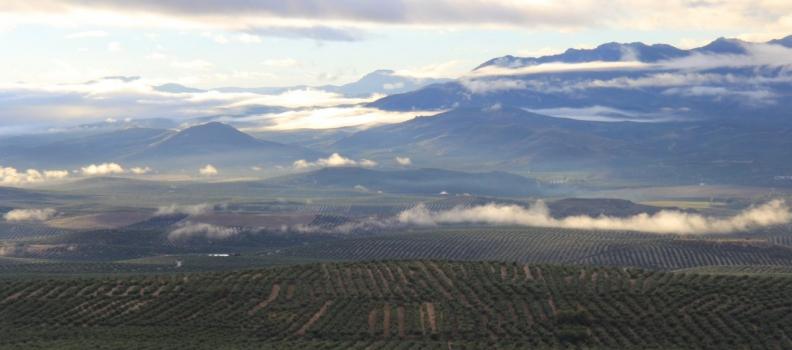 Inoleo se consolida como referente de innovación en la industria auxiliar oleícola