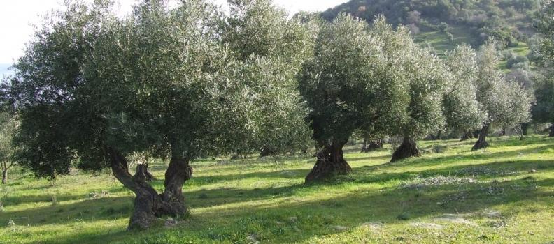 La Junta ha respaldado casi 25.000 proyectos desde 1991 para impulsar el desarrollo de zonas rurales en Andalucía