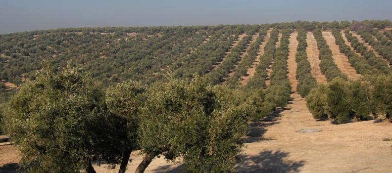 la Caja Rural de Jaén cierra el ejercicio 2015 con un saldo neto de 11,2 millones de euros