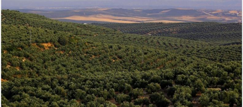 Las empresas de Anierac vendieron en mayo cai 30 millones de litros de aceite de oliva