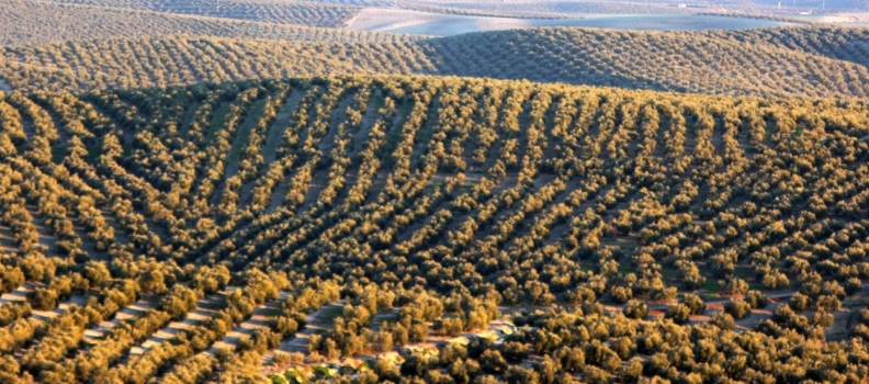 Víboras destaca en el Parlamento que el empleo en agricultura ha crecido un 45% en el último año en Andalucía
