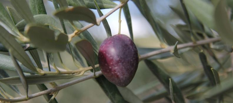 La UNIA celebrará en Baeza un curso sobre las estrategias y el cálculo de costes en la cadena de valor de los aceites de oliva