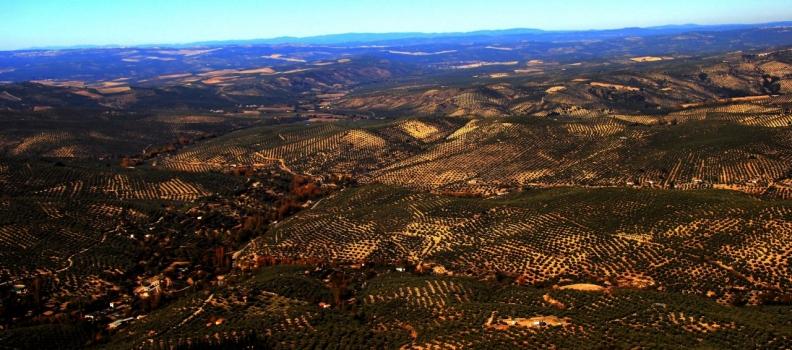 Se reducen un 66% las matriculaciones de vehículos agrícolas respecto al año pasado en la provincia de Jaén
