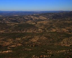 Un total de 400.000 toneladas de aceite de oliva se han comercializado en España en el primer trimestre de la campaña