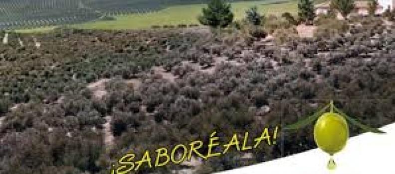 La Fiesta Anual del Primer Aceite de Jaén celebrará su quinta edición en Úbeda y en Hospitalet de Llobregat