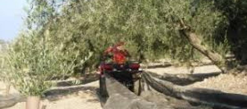 Organizaciones agrarias y cooperativas se manifestarán mañana en Jaén para pedir la homologación de los quads en la agricultura