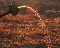 UPA Jaén asegura que trabajará para que el próximo Plan Hidrológico del Guadalquivir corrija «la injusticia histórica con la provincia en materia de regadíos»