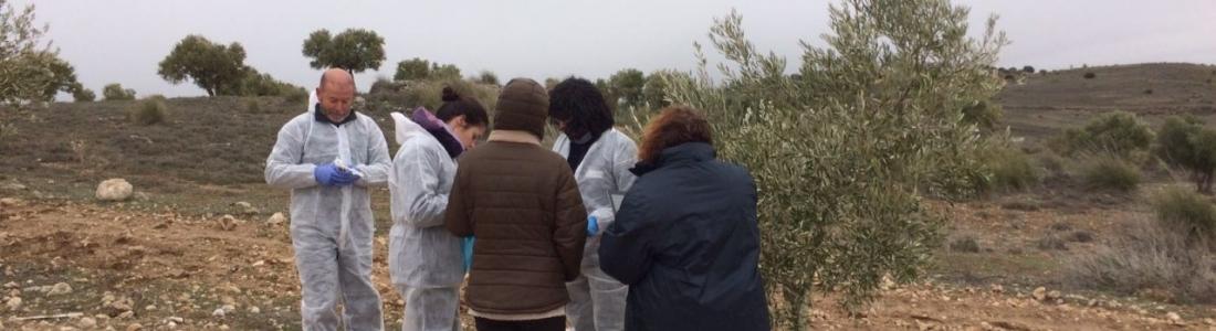 UPA-Madrid confía en que las medidas de contención frenen a la xylella fastidiosa