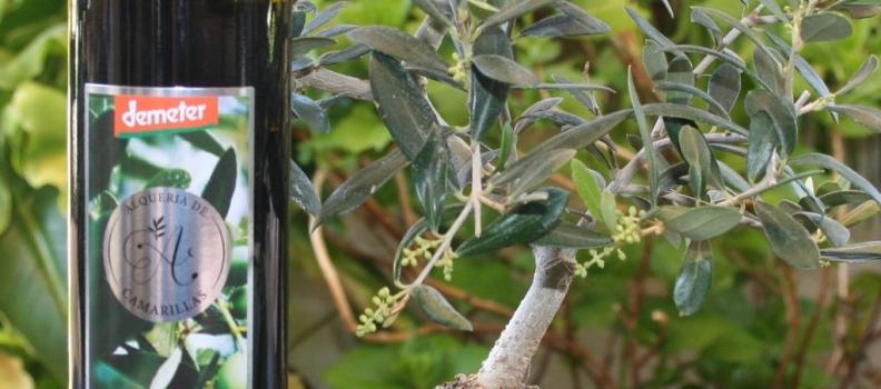 Alquería de Camarillas, aceite con doble certificación biodinámico  y DOP Sierra de Segura