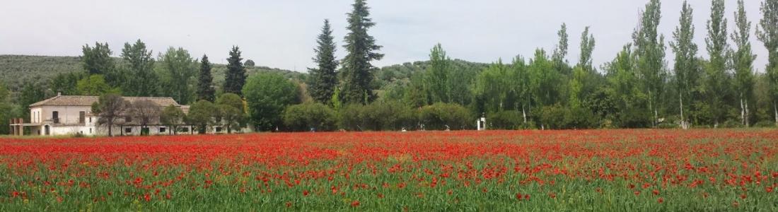 Agricultura asigna los nuevos derechos de la Reserva Nacional del Pago Básico solicitados en la campaña 2017