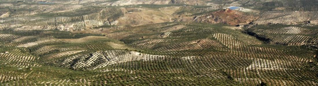 Agricultura publica las bases reguladoras de los Premios Alimentos de España