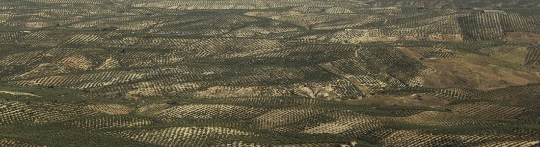 El III Plan Andaluz de la Producción Ecológica se somete a información pública en junio