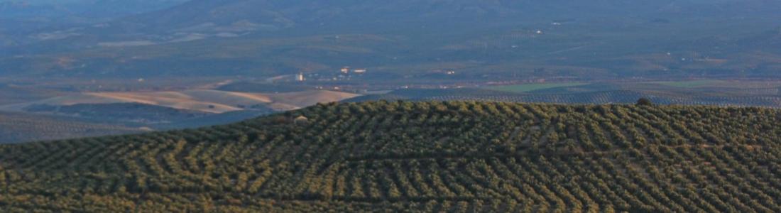 COAG-Jaén exige mayor sensibilidad de la Tesorería de la Seguridad Social con el sector agrario