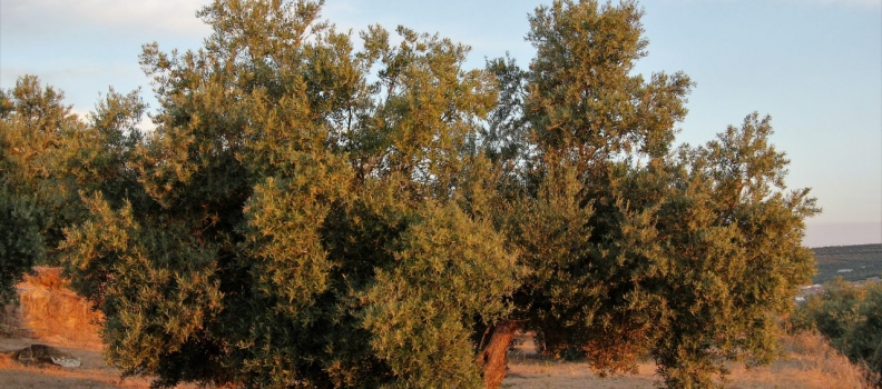 Ampliado el presupuesto para ayudas a zonas agrícolas con limitaciones naturales o específicas