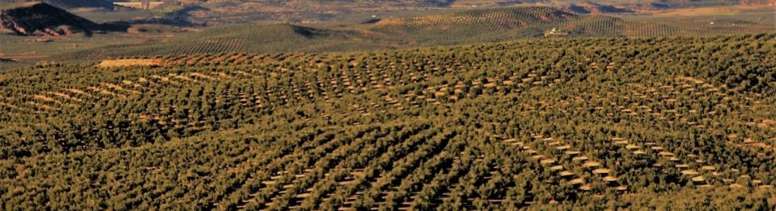 Aprobado el proyecto del 39 Plan de Seguros Agrarios Combinados