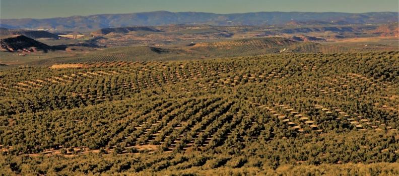 Interóleo confía que los precios del aceite de oliva se mantengan estables por encima de los tres euros el kilo
