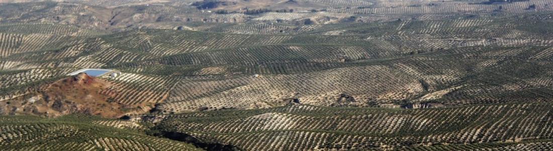 Carmen Ortiz teme que el Ministerio de Agricultura «volverá a dar la espalda» a Andalucía sobre las ayudas asociadas de la PAC