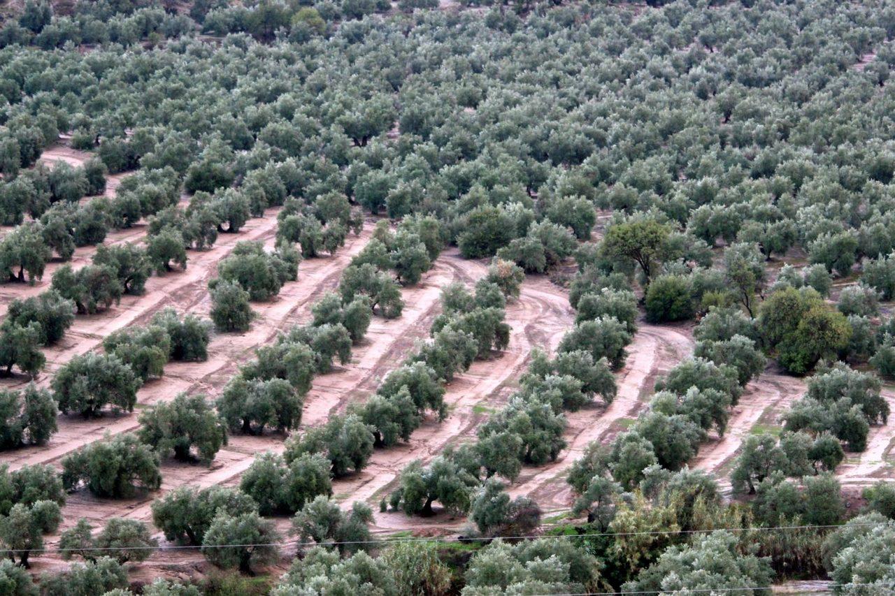 Agricultura convoca ayudas para actuaciones de apoyo a los seguros agrarios