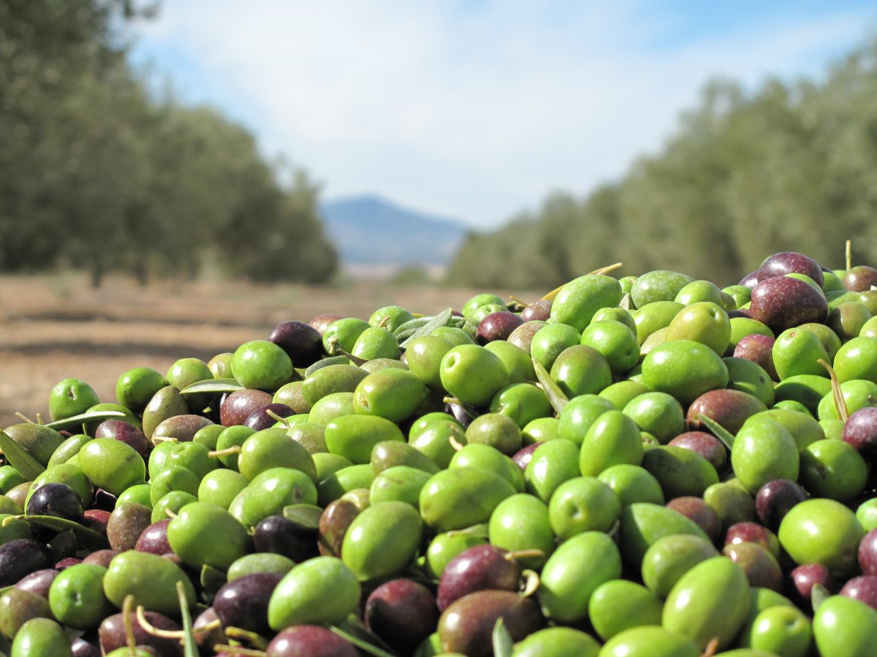 Carlos Cabanas dice que el vino, el aceite y las aceitunas son productos estratégicos