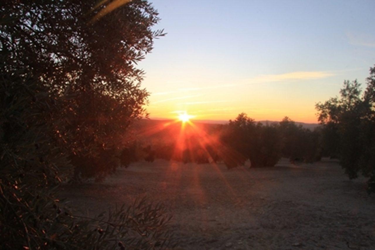 Presentadas más de 150 imágenes al concurso fotográfico «Jaén, paisajes del olivar»