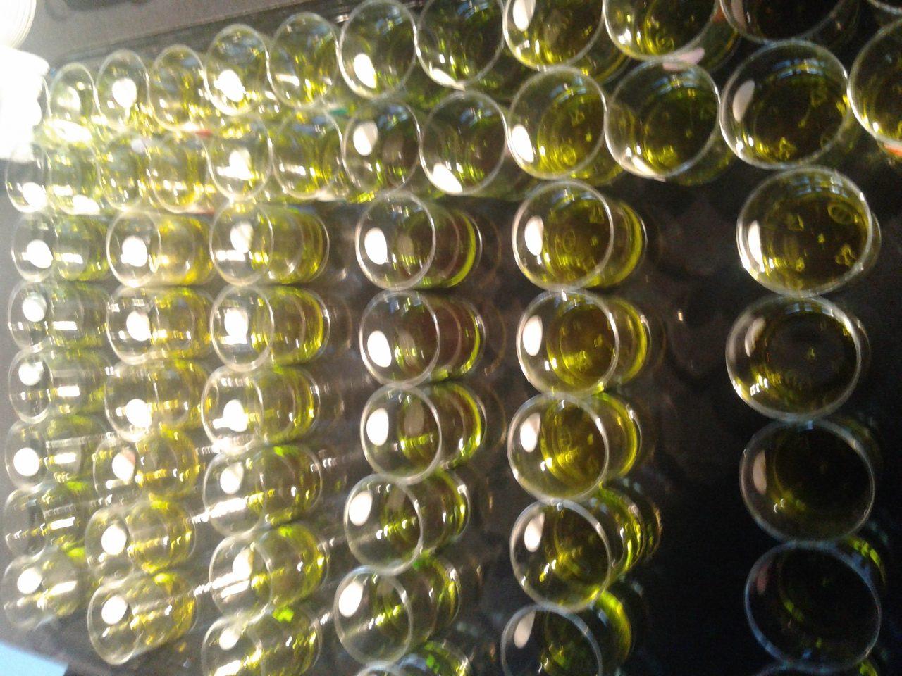 Las empresas de Anierac vendieron en noviembre 31 millones de litros de aceite de oliva